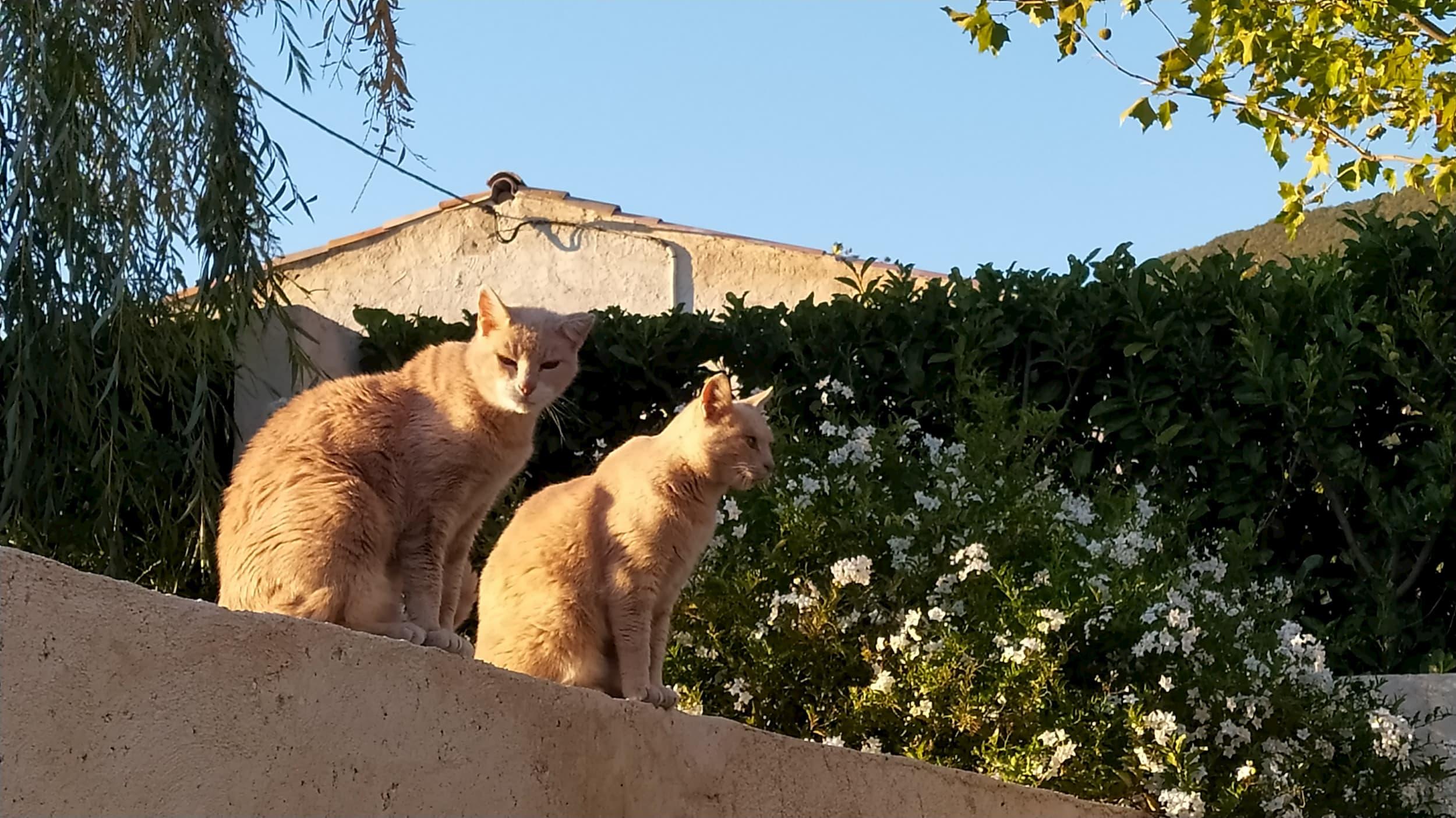 les chats vous attendent